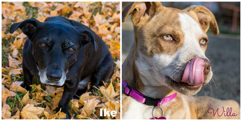 Ike and Willa