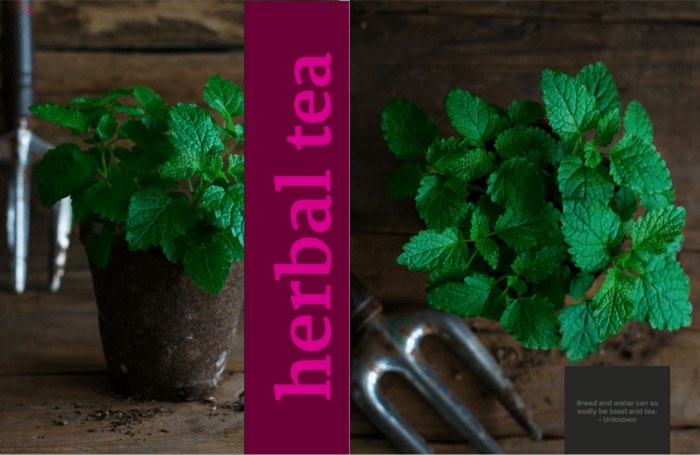 Herbal Tea Chapter from TEAse Me by Annie Oliverio